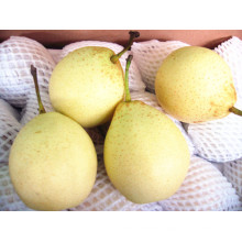 (32, 36.40, 44) Sweet Delicious Fresh Ya Pear
