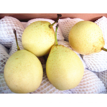 (32, 36.40, 44) Sweet Delicious Fresh Ya Pear