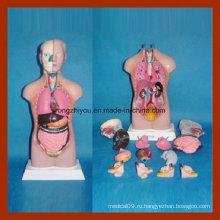 42см Анатомия человека безпольная модель туловища (14 шт)