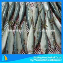 Peixe congelado fresco cavala venda quente na China