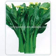 CS04 Dazhong 80 jours résistant au froid choy sum graines de graines de légumes
