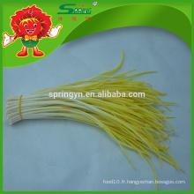 Saumon naturel et frais naturel poireaux au poireau ciboulette Chianque chinoise