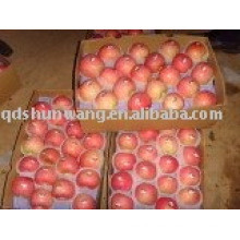 yaitai fresh red fuji apple