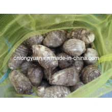 2015 Chinesische neue Ernte Taro