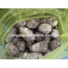 2015 Taro chinês novo da colheita