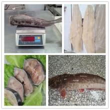 high quality pangasius HG/Fillets/ Steak