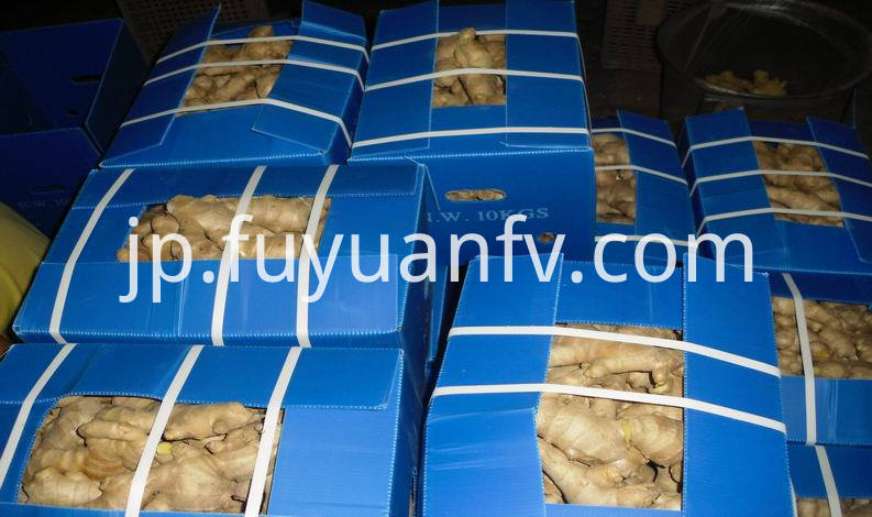 air dired ginger in plastic box
