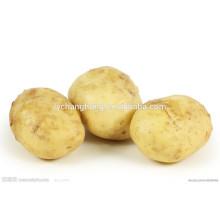 2014 hot sale new crop sweet seed potatos