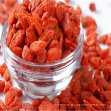 nova data Frutos secos secos goji vermelho