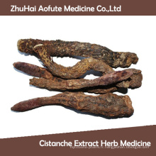Hot Sale Natural Cistanche Extrait Herb Medicine