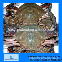IQF frozen crab seafood