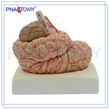 PNT-0611 9 parties du cerveau détachable avec des artères sur la tête, modèle de tête, modèle de cerveau