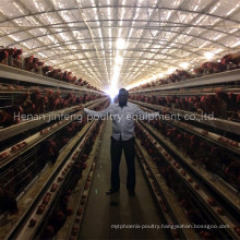 Battery Frame Poultry Chicken Cage for Farm Use