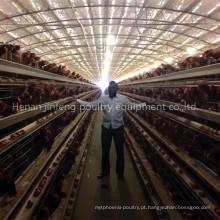 Gaiola de Frango da Exploração Avícola (Equipamento Avícola)