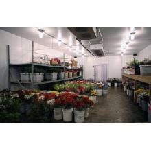 Sala do refrigerador da sala fria para o plantio da flor