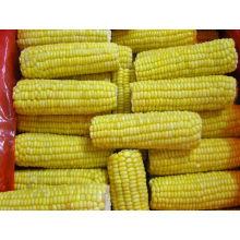 Épinard de maïs sucré congelé