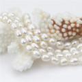 Collier de perles d'eau douce de 19 po