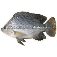 Alimento probiótico en el pescado