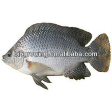 Altération du probiotique chez les poissons