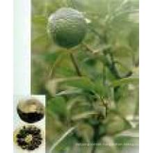High Quality Neohesperidin & Neohesperidin Dihydrochalcone