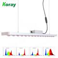 O diodo emissor de luz completo da ESPIGA do espectro 1000W cresce a luz para plantas medicinais