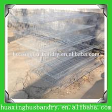 Les meilleures fermes de caille d'usine de Chine