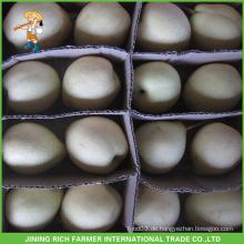 Chinesische Frucht Hebei Hochwertige neue Ernte Frische Ya Birne
