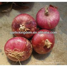Cebolla roja 2013 nueva cosecha