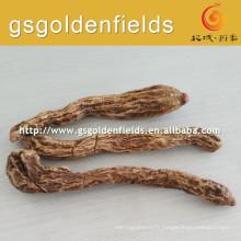 Cynomorium songaricum cru chinois sur la vente chaude
