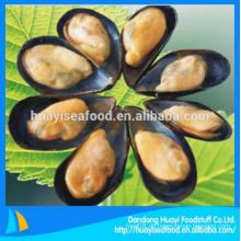 Köstliche gefrorene hervorragende halbe Muschel Muschel guter Anbieter