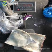 Frozen Indian Ocean Black Squid Fillet Skin on Sea Frozen 100% N.W.