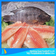 Frozen tilapia is very popular in the world