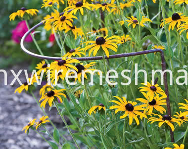 bow-plant-support-rudbeckia-hirta