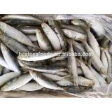 Frozen Sardine (6-8pcs/kg )