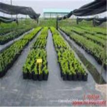 Tela no tejida tejida PP negra de los PP de la mala hierba de 100GSM para la agricultura