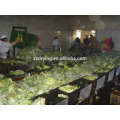 Dehydrated Vegetable Pre-processing Line