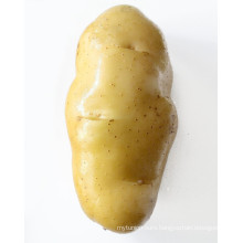 wholesale best price and good sale potatoes