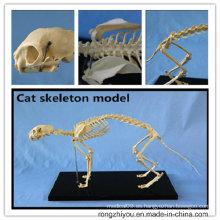 Modelo de esqueleto anatómico del gato de la vida del PVC de la venta caliente
