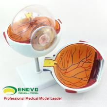 EYE01 (12525) Ampliar 6x anatomia de modelo de olho humano em tamanho natural de vida em 6 partes para educação escolar