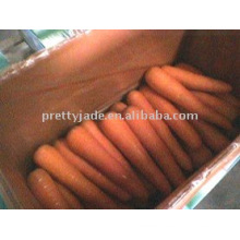 Chinese fresh carrot for export