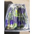 Chinese Green Fresh Celery Price
