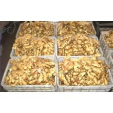 100 à 250 g de gingembre frais