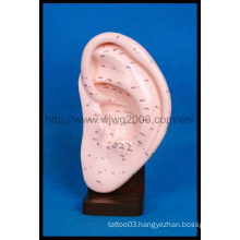 Message Acupuncture Ear Model (M-3-22)
