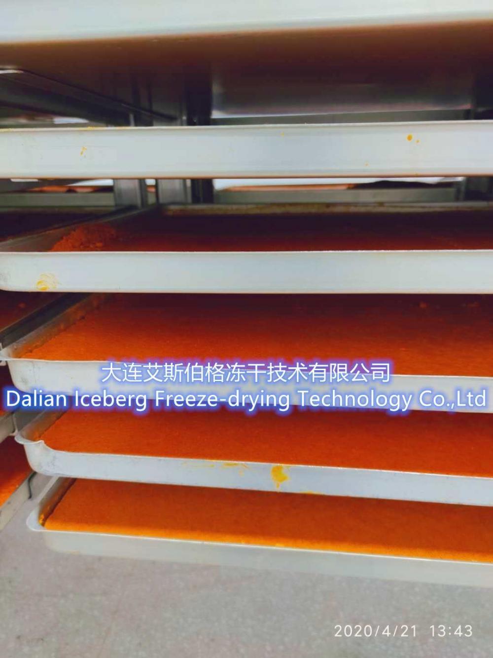 Sweet corn Freeze drying equipment