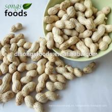 Proveedor de concha de maní en alibaba