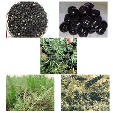 Medlar Zertifizierte Gojivberry Organic Black Goji Berry