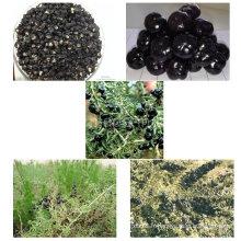 Baie de goji noir biologique Gojivberry certifiée par le nèfle