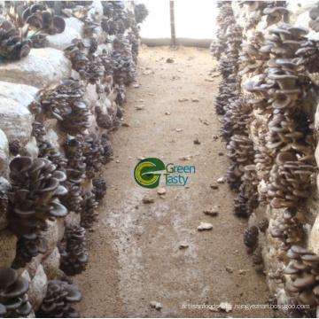 Meilleur Qualité / Prix Frozen Baby Oyster Mushroom
