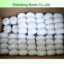 Großhandelsgröße 5.0-5.5cm reiner weißer frischer Knoblauch