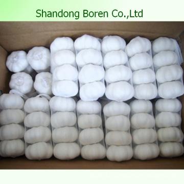 10kg Carton Normal Blanc et Pure White Ail frais